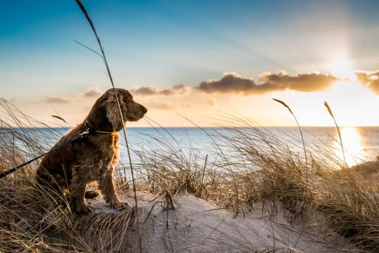 A dog sits on a St. Augustine beach