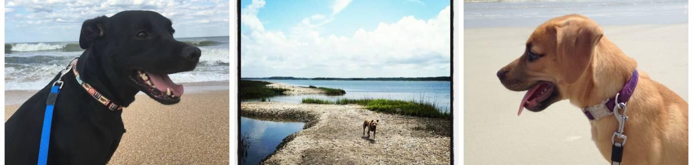 dogs on a beach